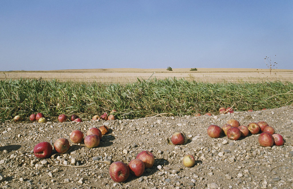 ©RNW, Fallen Apples, from <em>My Dakota</em>